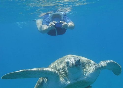 Day Trip Snorkeling and Swimming with Turtles and Dugongs from Soma Bay