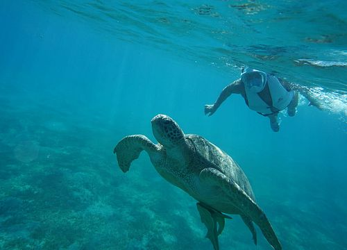 Day Trip Snorkeling and Swimming with Turtles and Dugongs from Makadi Bay