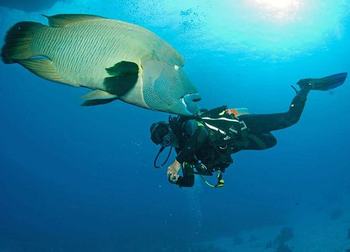 Intro Diving Makadi Bay: Discover Scuba Diving & Introductory Dive