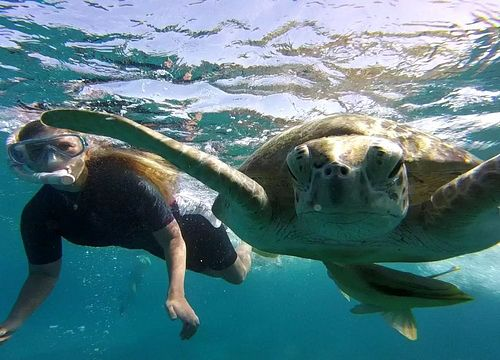 Day Trip Snorkeling and Swimming with Turtles and Dugongs from Hurghada